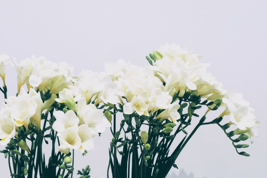 blog-header_freesia
