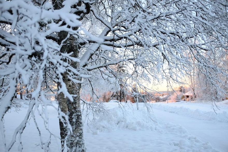 snow-forest_blog-header2